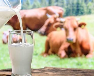 Latte, bene a tutte le età ma attenzione a come si beve