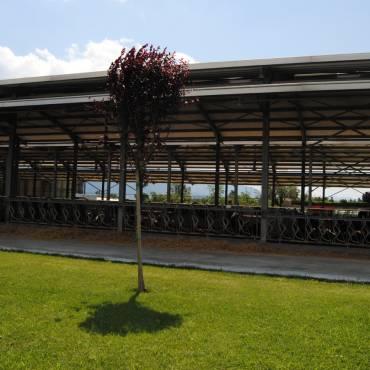 Azienda Agricola Vitelli