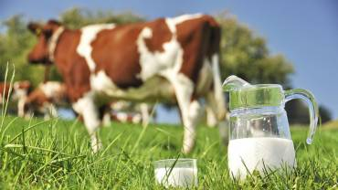 MILK: TYPOLOGIES, NUTRITIONAL VALUES AND LABEL