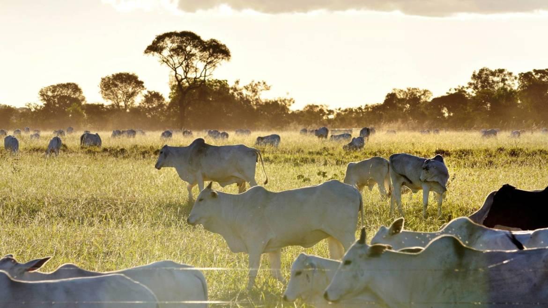 L'importanza della alimentazione delle mucche