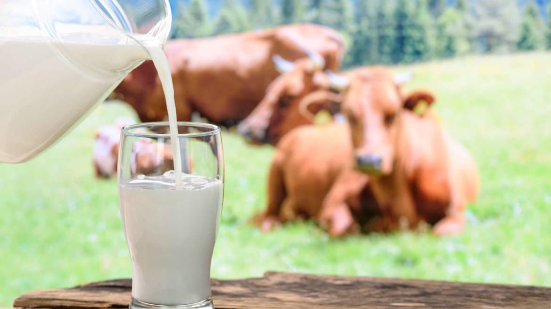 latte-nutrizionista.jpeg