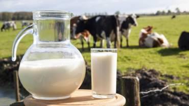 Il latte fa male: un mito da sfatare